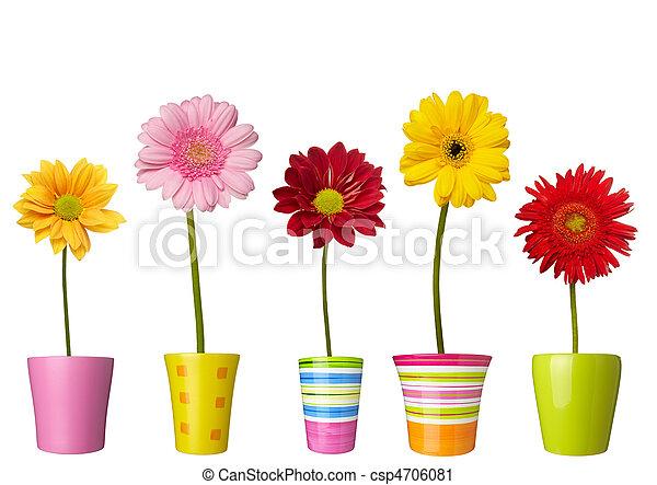 botanique, jardin fleur, nature, pot, pâquerette, fleur - csp4706081