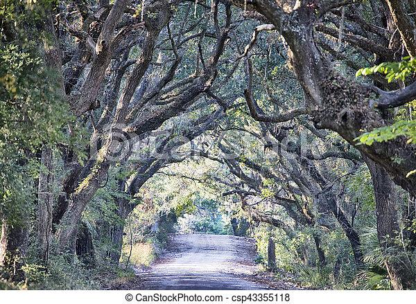 Botany Bay Plantation Spooky Dirt Road Marsh Oak Trees Tunnel with spanish moss on Edisto Island SC - csp43355118