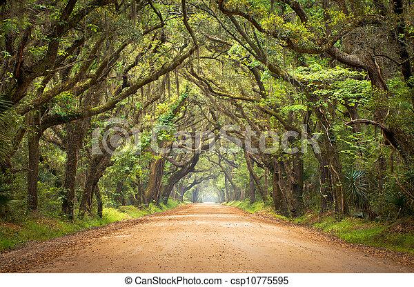 Botany Bay Plantation Spooky Dirt Road Creepy Marsh Oak Trees Tunnel with spanish moss on Edisto Island, SC - csp10775595