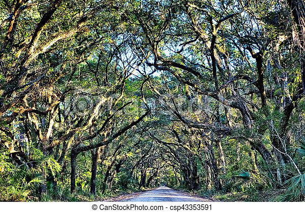 Botany Bay Plantation Spooky Dirt Road Marsh Oak Trees Tunnel with spanish moss on Edisto Island SC - csp43353591