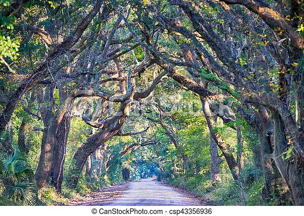 Botany Bay Plantation Spooky Dirt Road Marsh Oak Trees Tunnel with spanish moss on Edisto Island SC - csp43356936