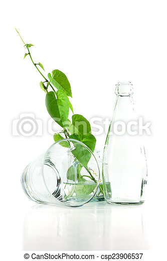 Bottle and glass of water with green ivy. - csp23906537
