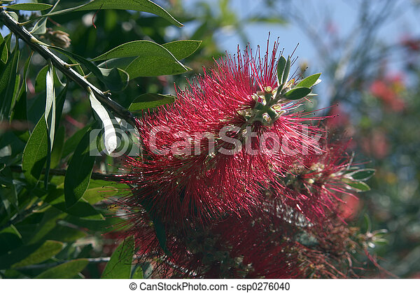 Bottle Brush - csp0276040