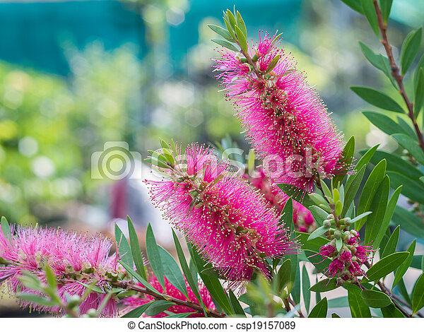 Bottle brush tree and flower - csp19157089