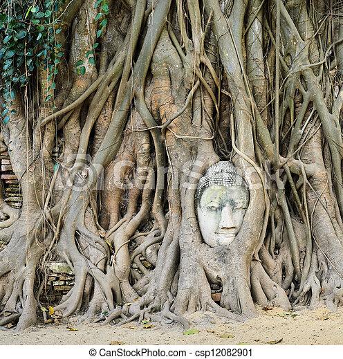 bouddha, tête, coffre, arbre - csp12082901