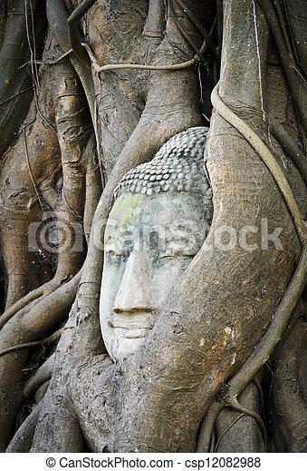 bouddha, tête, coffre, arbre - csp12082988