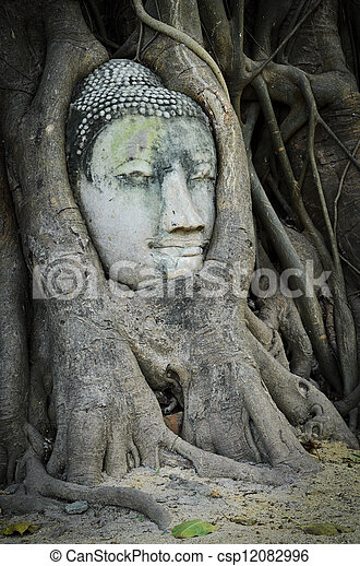 bouddha, tête, coffre, arbre - csp12082996