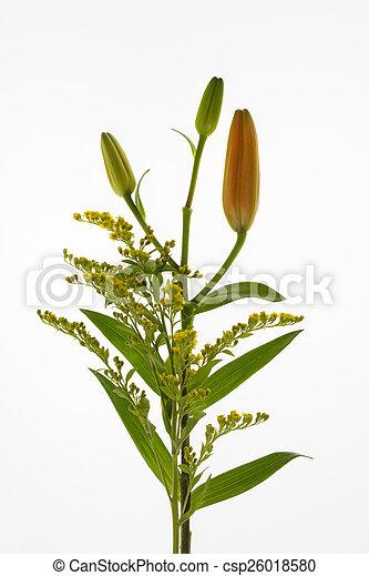 bouguet, 花, white. - csp26018580