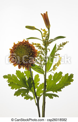 bouguet, 花, white. - csp26018582