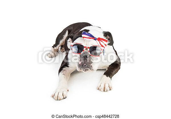 bouledogue, porter, drapeau américain, accessoires - csp48442728