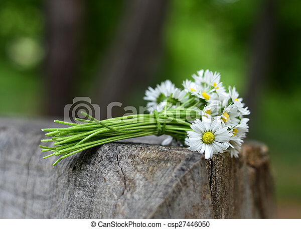 Bouquet daisies - csp27446050