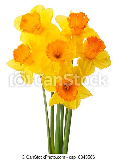bouquet fleur jonquille isol ou fond narcisse coupure blanc - Fleur Jonquille