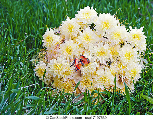 Bouquet from yellow asters with butterfly on green grass. - csp17197539