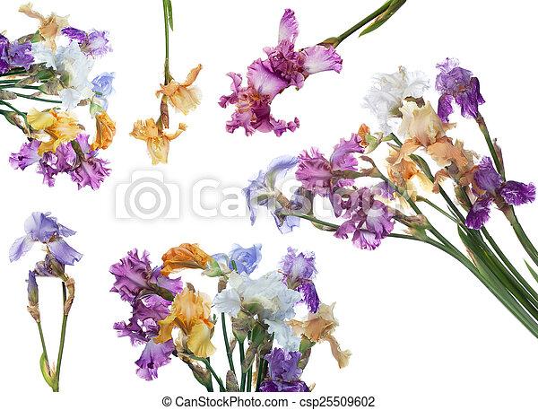 bouquet, iris, fleurs - csp25509602