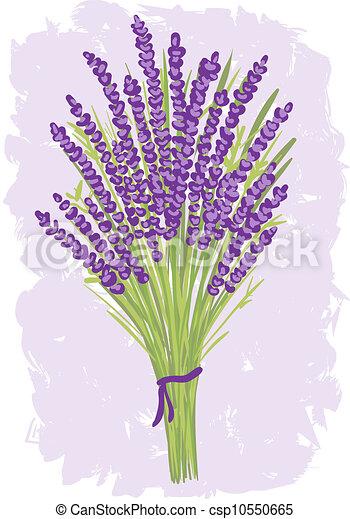bouquet, lavande, illustration - csp10550665