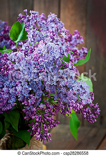 bouquet, lilas - csp28286558