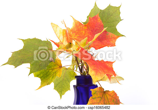 Bouquet of autumn leaves in bright colored vase on a white background - csp16065482