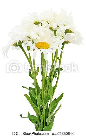 Bouquet of chamomile flowers  - csp21850644