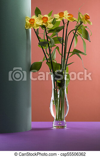 Bouquet of daffodils in a glass vase on a colored background - csp55506362