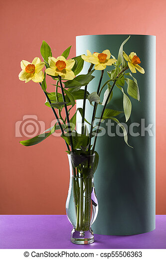 Bouquet of daffodils in a glass vase on a colored background - csp55506363