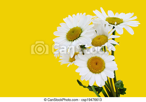 bouquet of daisies - csp19476613
