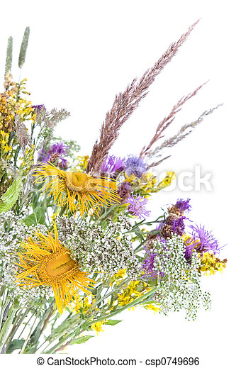 Bouquet of field flowers and plants - csp0749696