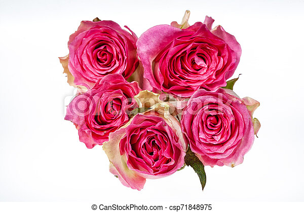 Bouquet Of Flowers - csp71848975