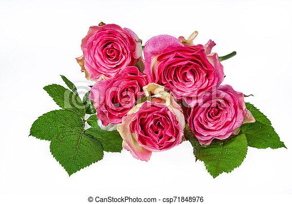 Bouquet Of Flowers - csp71848976