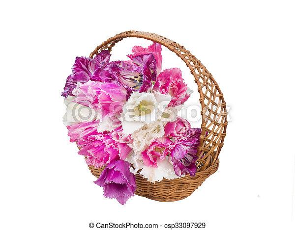 bouquet of fringed tulips in a wicker basket - csp33097929