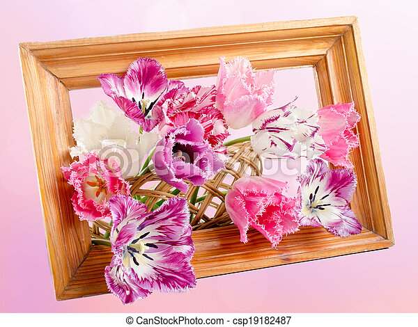 bouquet of fringed tulips - csp19182487