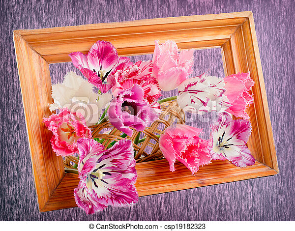 bouquet of fringed tulips - csp19182323