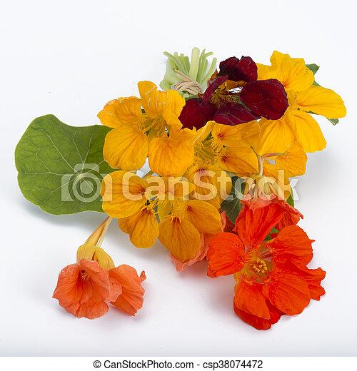 bouquet of garden nasturtium - csp38074472