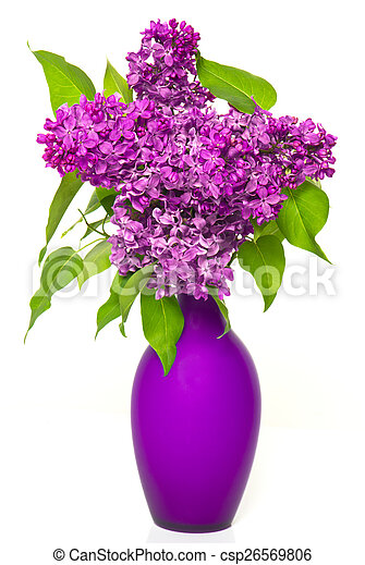 bouquet of lilac flowers in vase - csp26569806