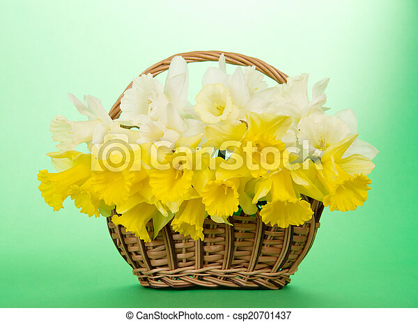 Bouquet of narcissuses in a wattled basket - csp20701437