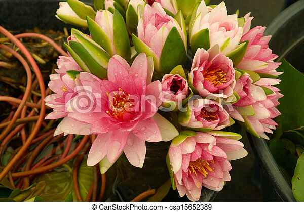 Bouquet Of Pink Lotus Flower