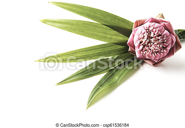 A Bouquet Of Pink Lotus On A White Background Spa Floral Background