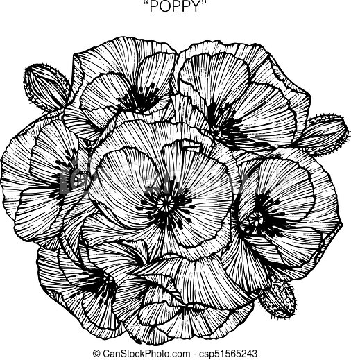 bouquet of poppy flowers drawing