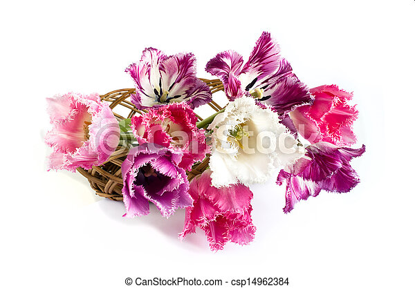 bouquet of tulips are on a white background - csp14962384