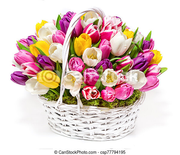 bouquet of tulips in a basket - csp77794195