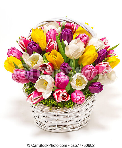 bouquet of tulips in a basket - csp77750602