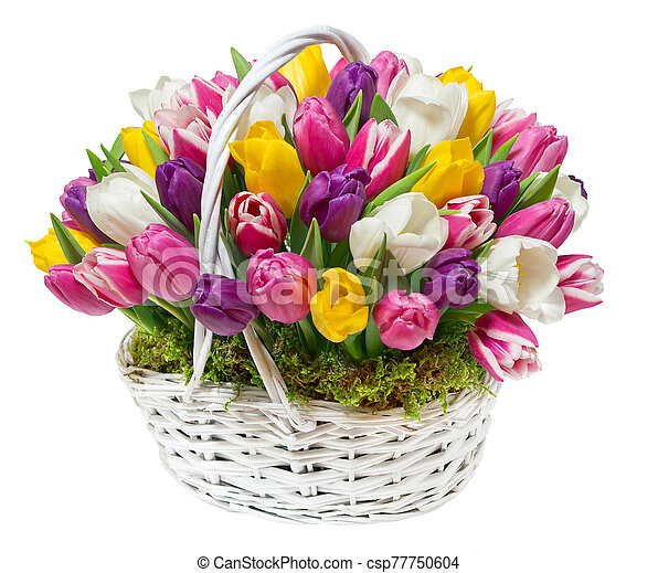 bouquet of tulips in a basket - csp77750604