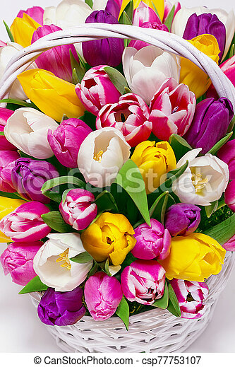 bouquet of tulips in a basket - csp77753107
