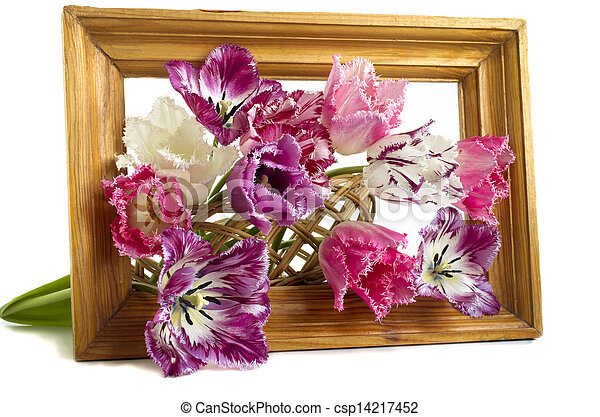 bouquet of tulips in a frame on a white background - csp14217452
