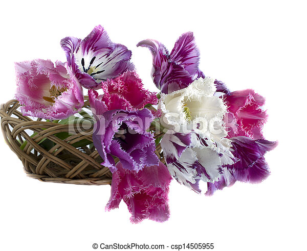 bouquet of tulips in a frame on a white background - csp14505955