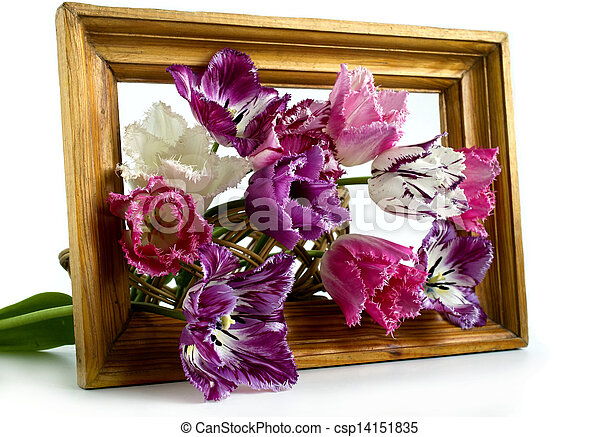 bouquet of tulips in a frame on a white background - csp14151835