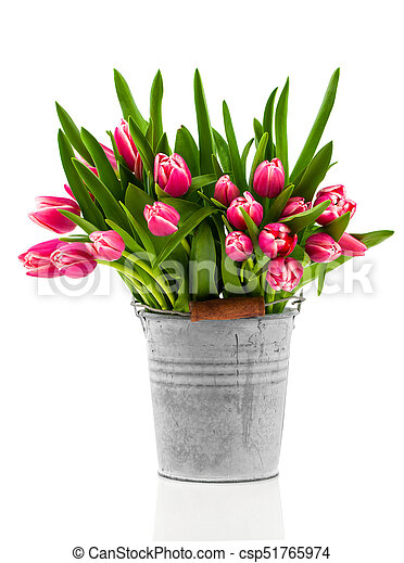 bouquet of tulips in an bucket on a white background - csp51765974