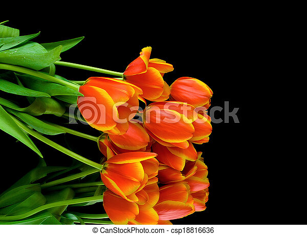 bouquet of tulips on a black background - csp18816636