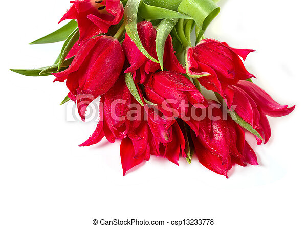 Bouquet of tulips on a white background - csp13233778