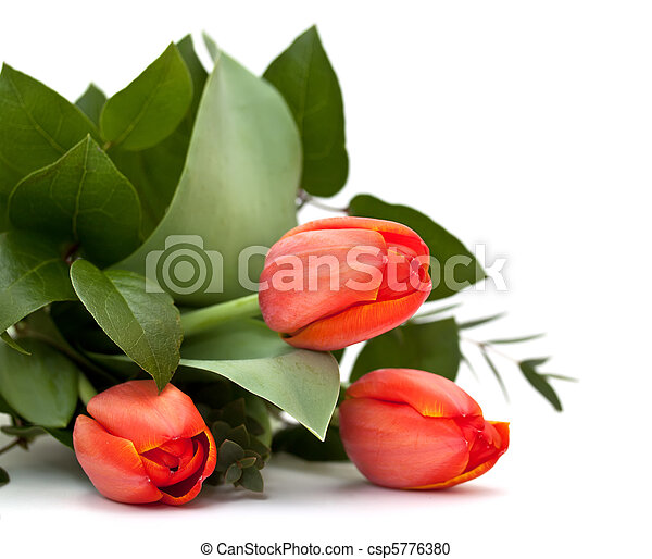 bouquet of tulips on a white background - csp5776380