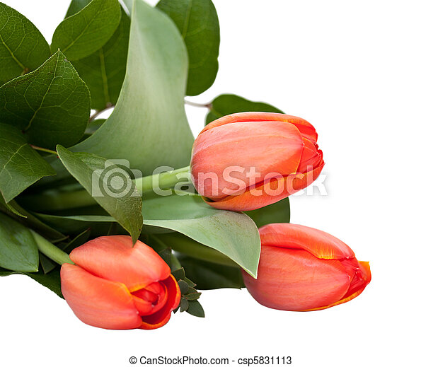bouquet of tulips on a white background - csp5831113